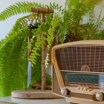 Top 5 des plantes dépolluantes pour assainir votre intérieur
